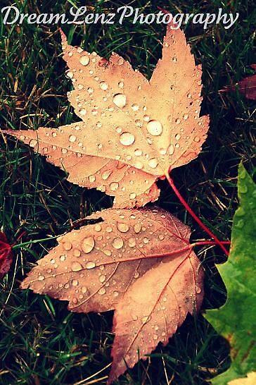 Always Raining  by dreamlenz