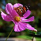 Pretty In Pink by Pamela Hubbard