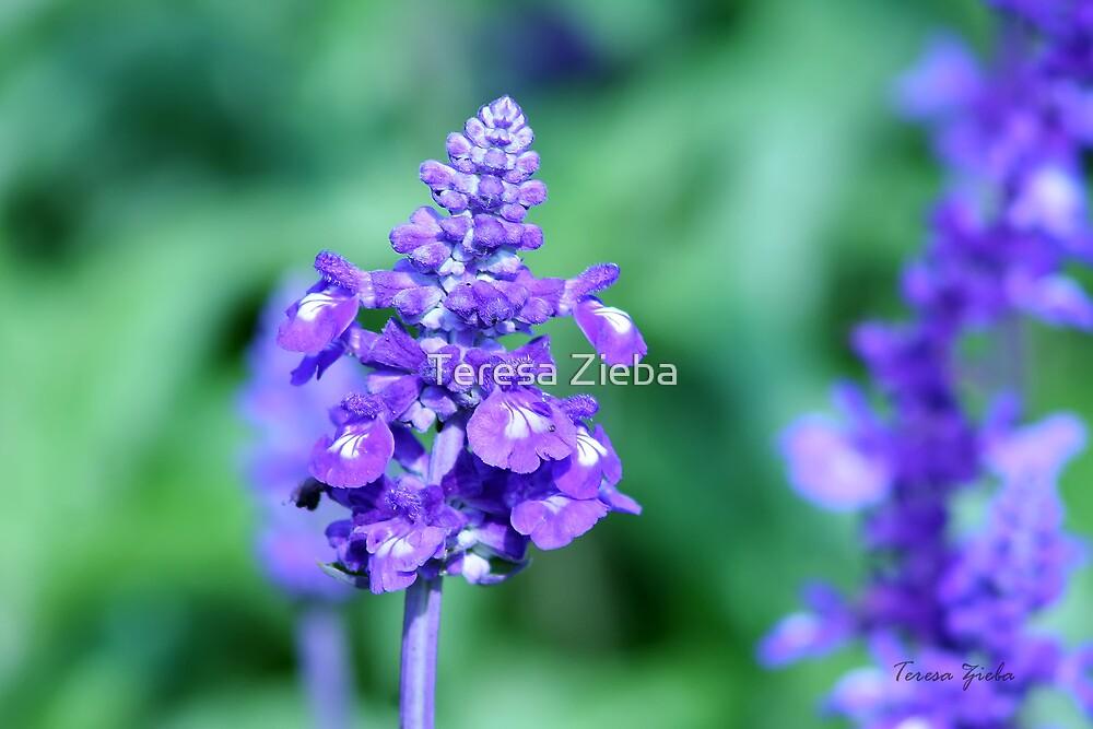Purple & Green by Teresa Zieba