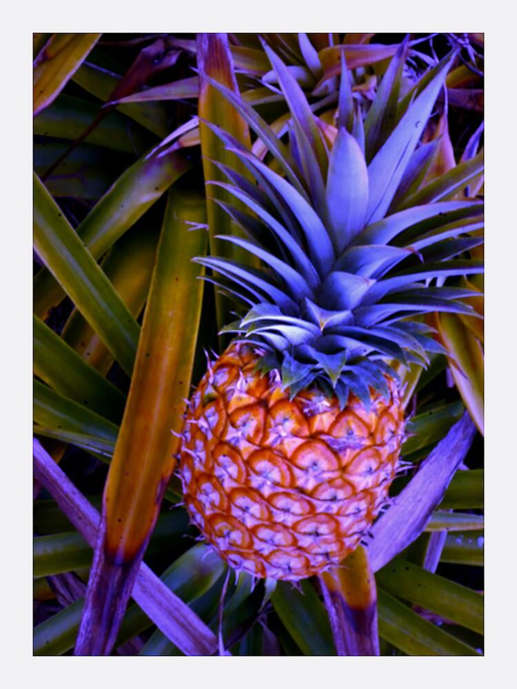 Pineapple-icious! by Julia Mainwaring-Berry
