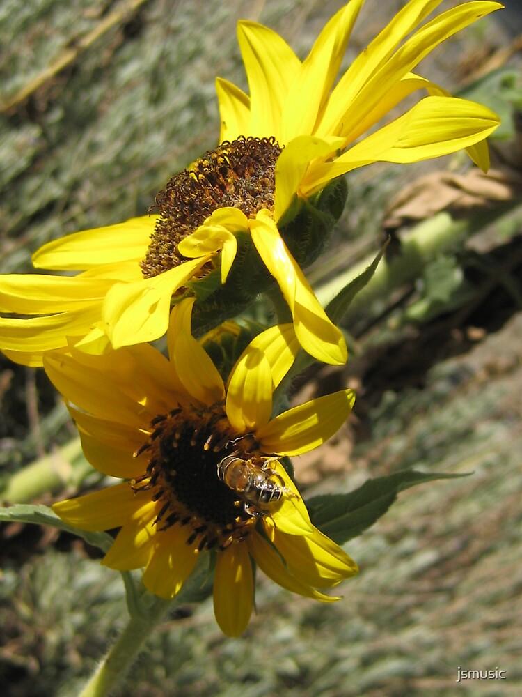 Sunflower by jsmusic