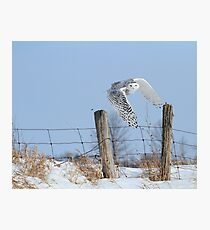 Windswept glory Photographic Print
