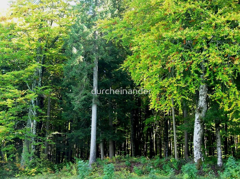 Quiet forest by durcheinander