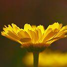Yellow Lumen by Richard G Witham