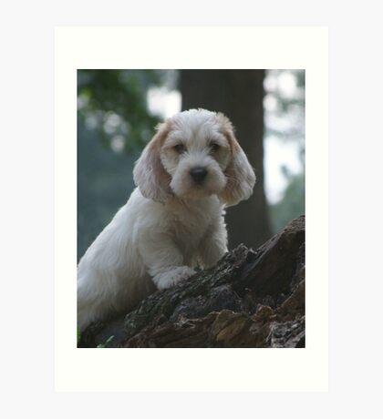 PBGV Puppy Art Print