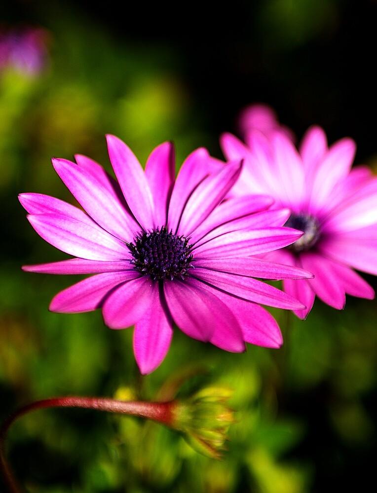 Flower Duo by jonahsia