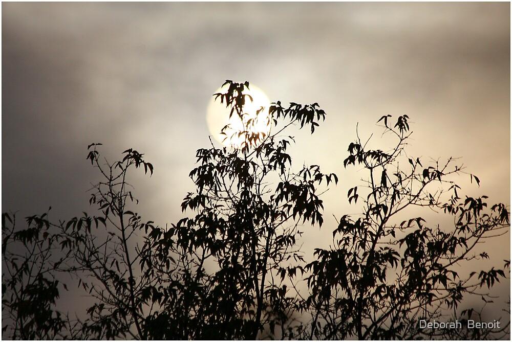 Early Morning Hazy Sunrise by Deborah  Benoit
