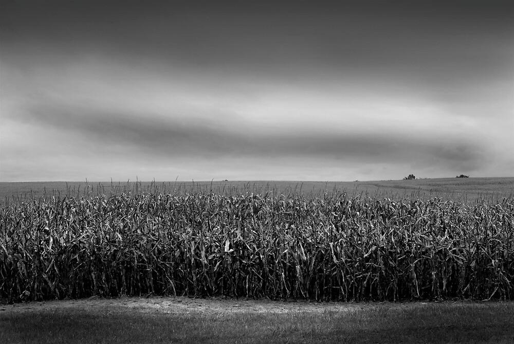 Corn Field by Robert Baker