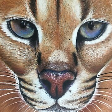 Caracal by mbillustrations