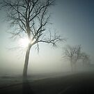Winter Fog by Donna R. Cole