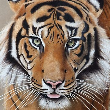 Tiger by mbillustrations