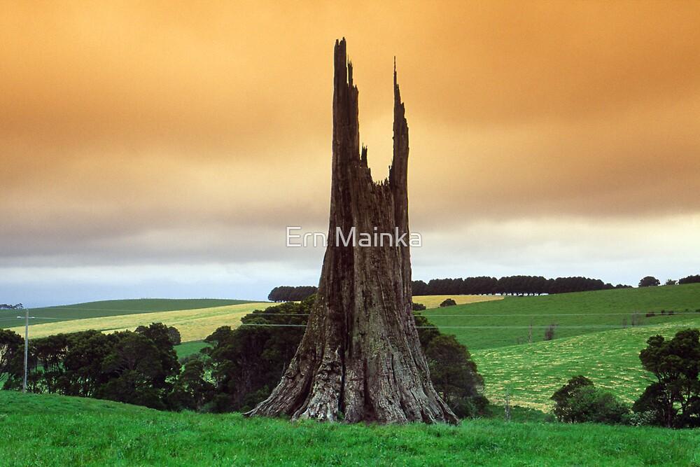 Where giants once stood. by Ern Mainka