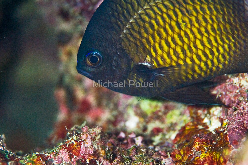 Can you see my scales? by Michael Powell