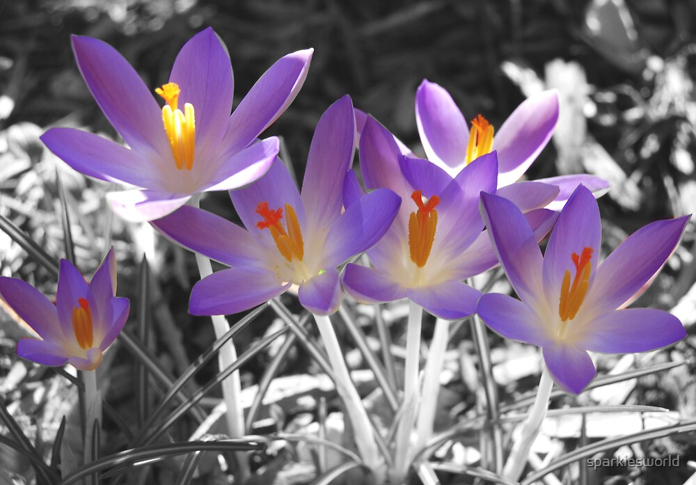 Sping flowers by sparkiesworld