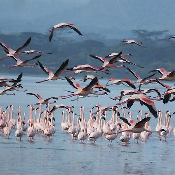 Flamingoes in flight  by martina
