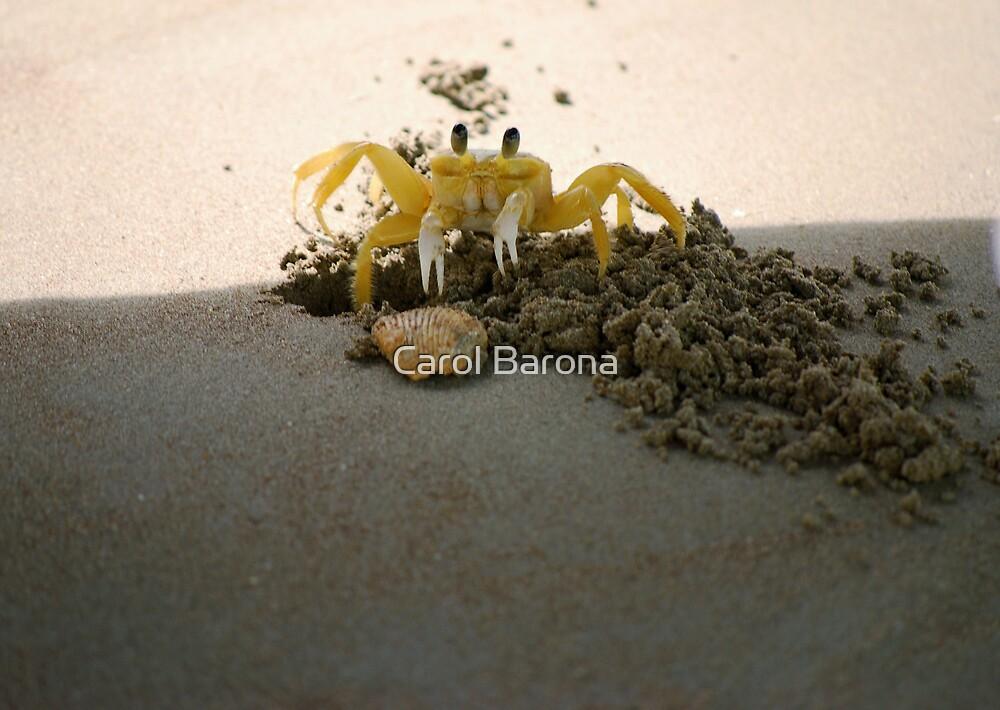 Hey, Don't Take My Shell by Carol Barona