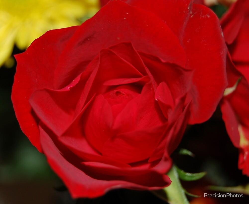 Rose Set-1 by PrecisionPhotos