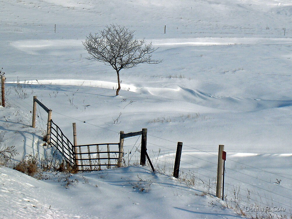 Waiting for Spring by Donna R. Cole