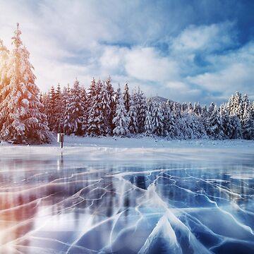 Winter Sunlit Forest  by DV-LTD