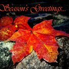 Season changes by MEV Photographs