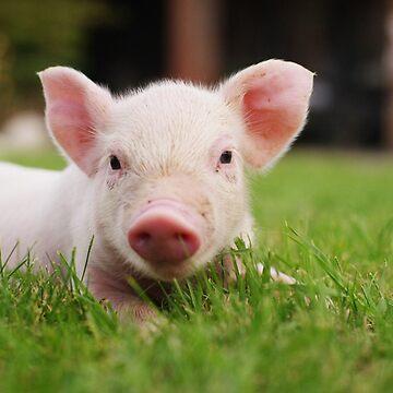 Little Baby Piglet Pig by DV-LTD