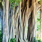 Banyan Tree by Caleb Ward