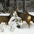 Winter Wonderland by whisperjo