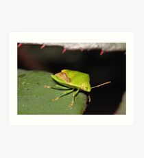 Green Shield Bug Art Print