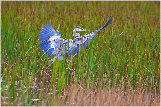 Soft Landing by Deborah  Benoit