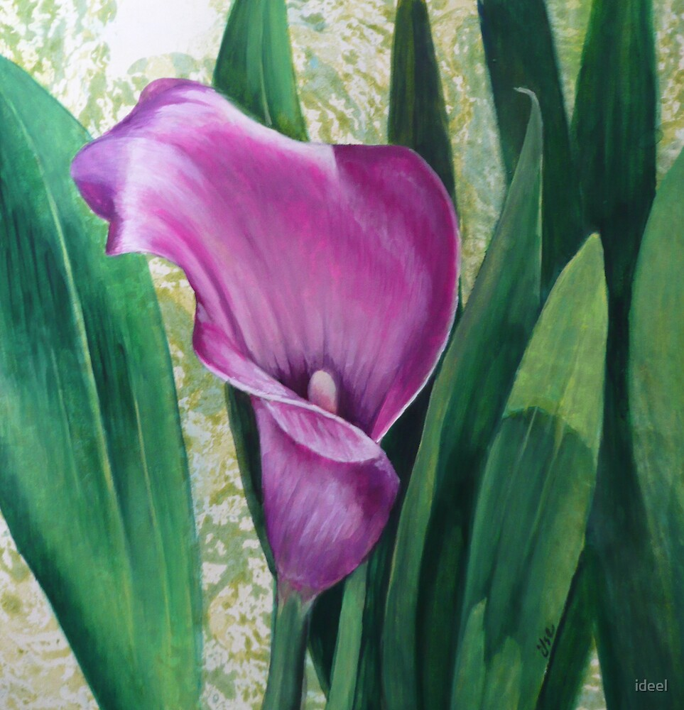 paintings, flowers, Cala Lilly by ideel