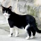 Black And White Cat by lynn carter