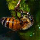Fractalius Bee by Virginia N. Fred