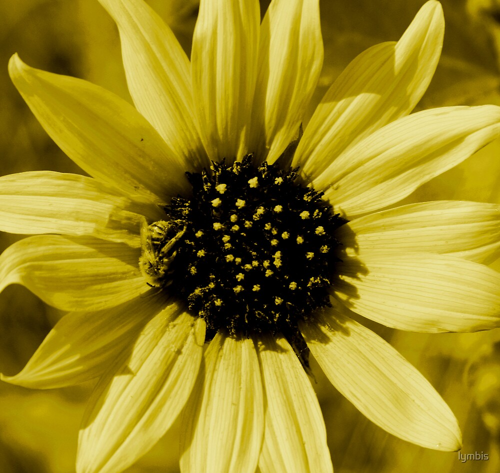 Mellow Yellow by Lynn Stratton