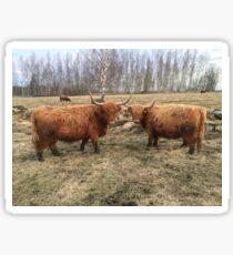 Scottish Highland Cattle Cows 1100 Sticker