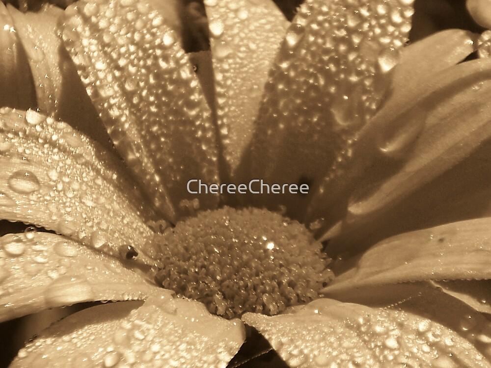 Sepia Daisy by ChereeCheree