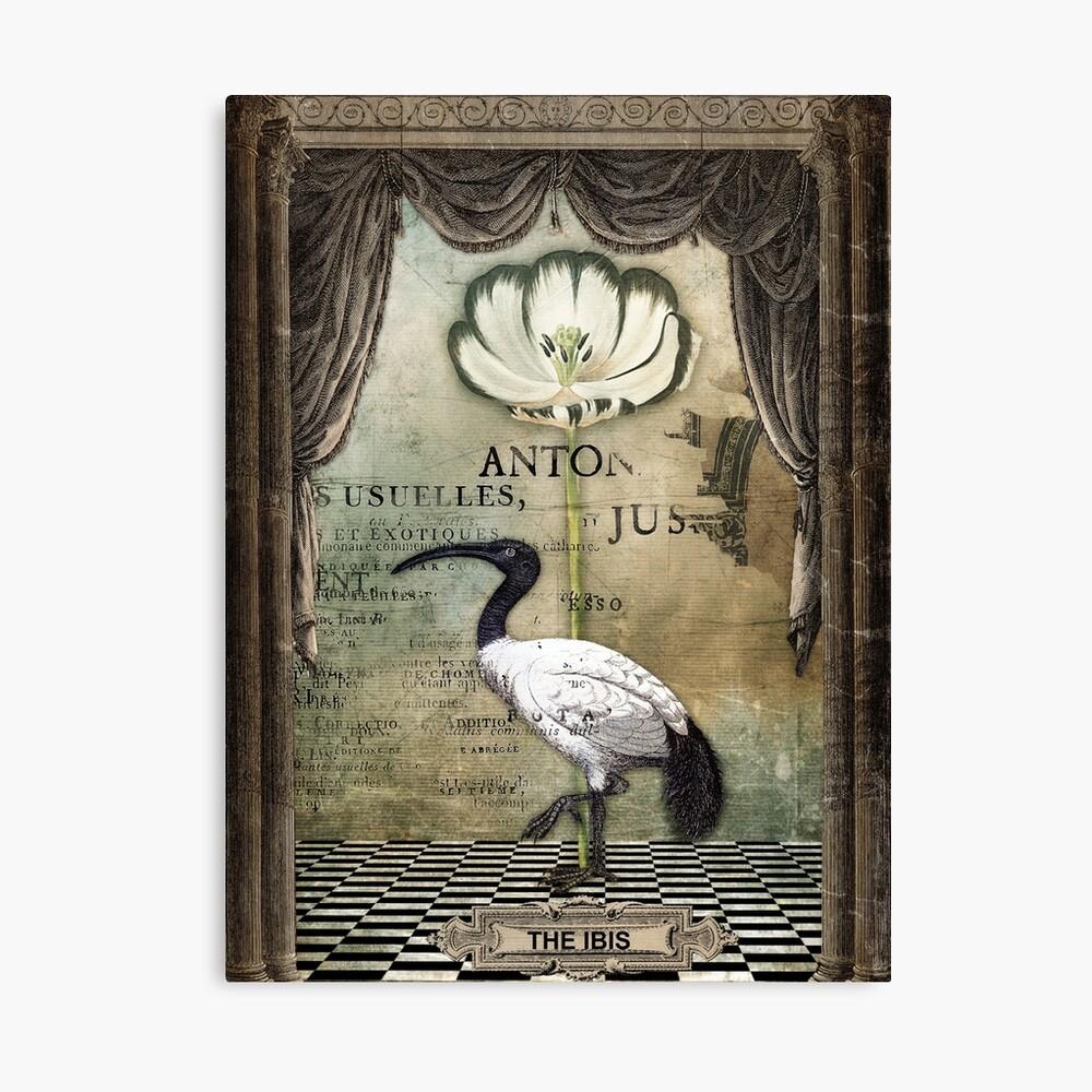 The Ibis Canvas Print