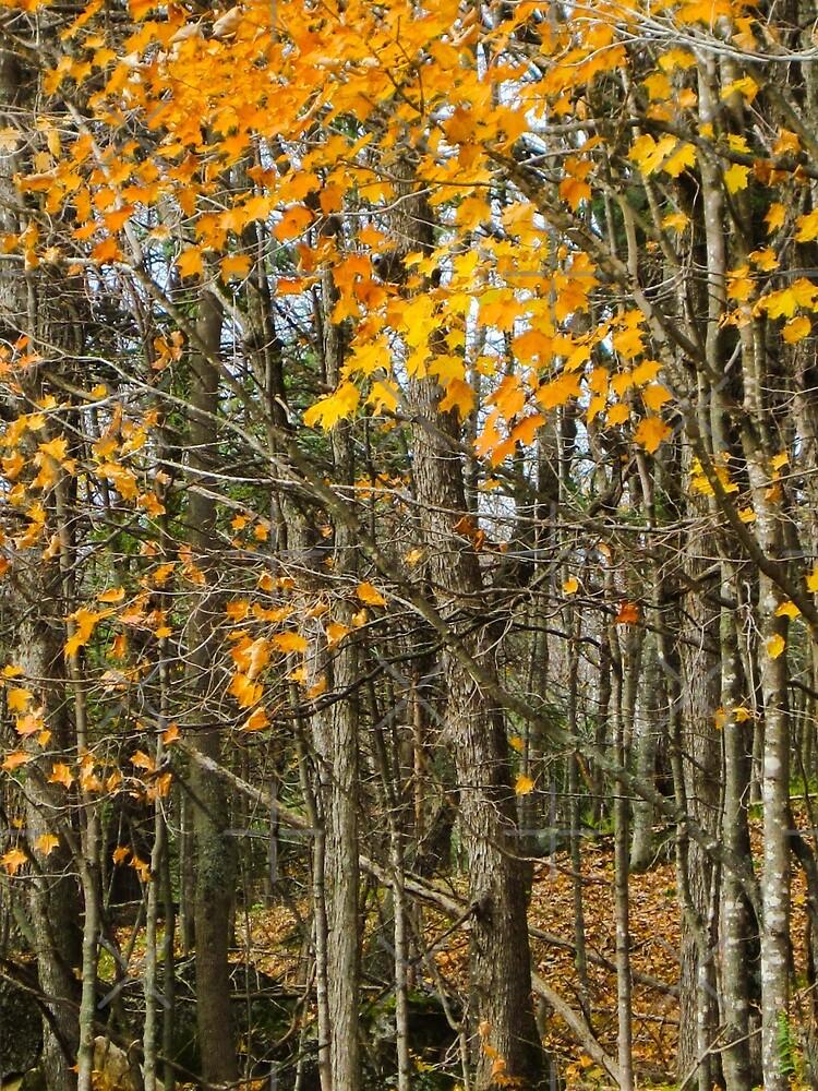 Autumn woods by debfaraday