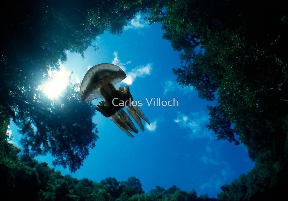 Flying Jellyfish by Carlos Villoch