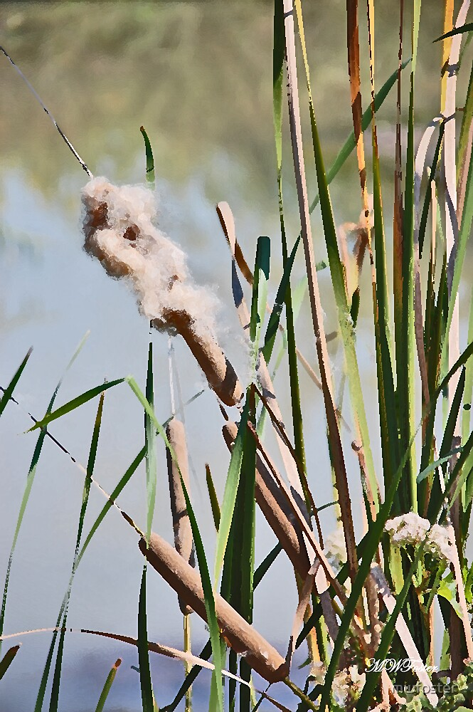 Cattails by mwfoster