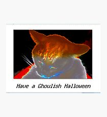 Ghoulish white cat Photographic Print