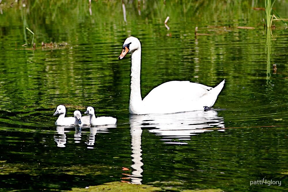 Mute Swan & Cygnets by patti4glory