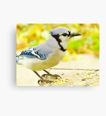 Breakfast with Jay  Canvas Print