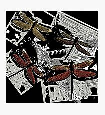 Graphic Dragonfly Print Red & Yellow Photographic Print