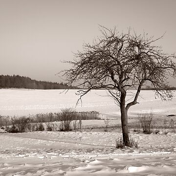 Winter Impressions by evelynlaeschke