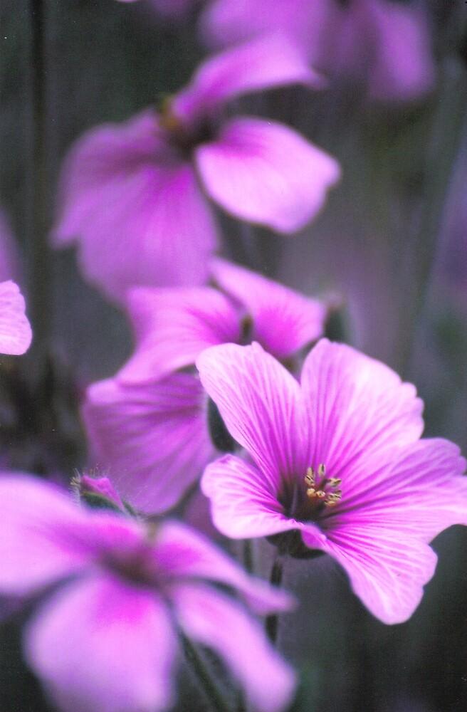 purple spray by Emma Dixon