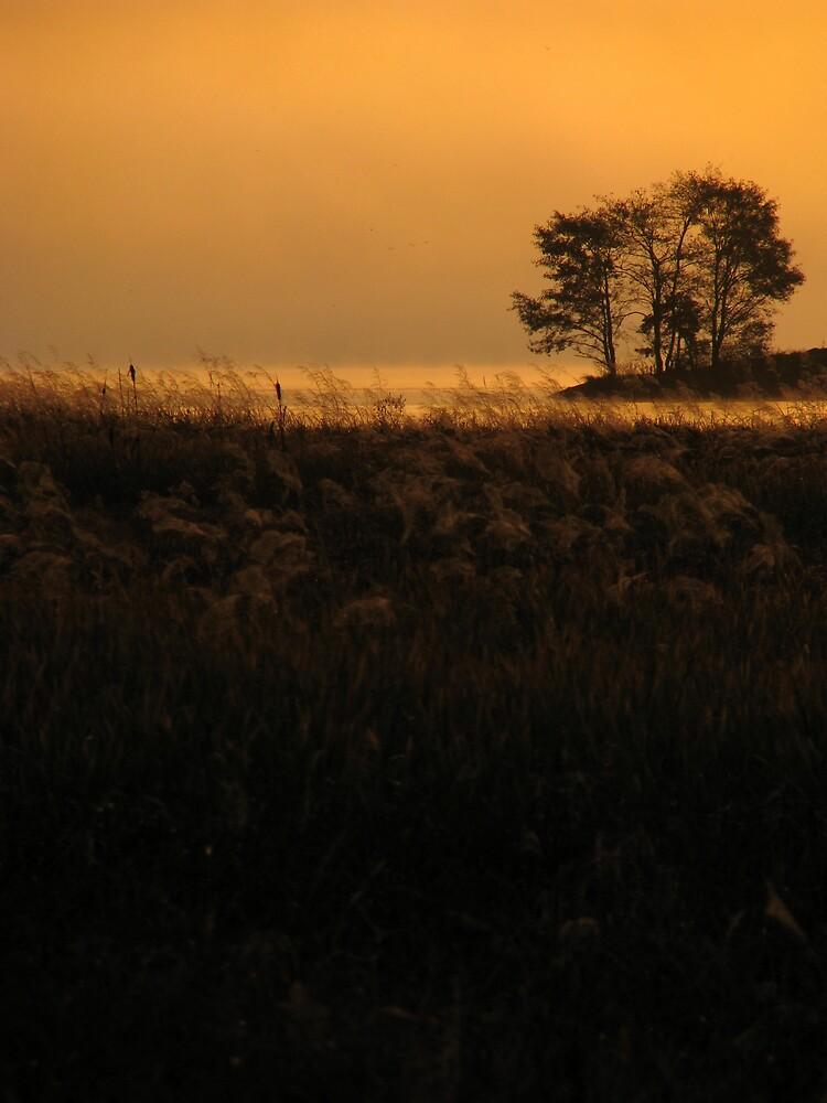 'Morning' by Petri Volanen