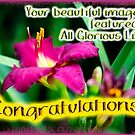 Featured Banner - All Glorious Lilies - Not for Sale by MotherNature