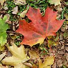 fall colours by dorka31
