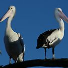 Pair of Pelicans by Michael Humphrys