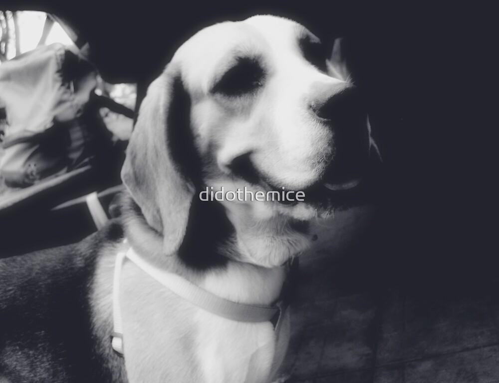 dog by didothemice